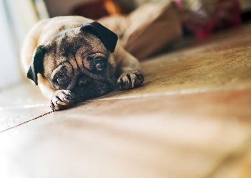 7 Tips for Saving Money on Pet Care